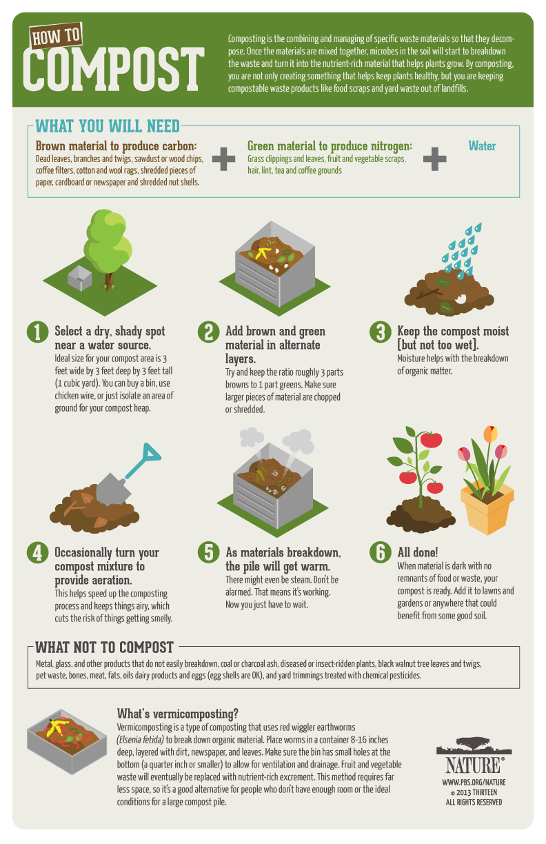 Composting infographic